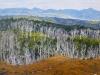 1st - John Adeney - Robyn Uglow - _Tasmanian Scene_ - Acrylic