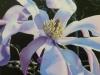 1st - Tom Stephens - Bev Hardidge - _Magnolia_ - Acrylic